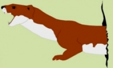 too long weasel