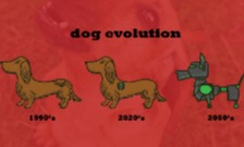 Dog evolution