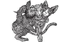 Trojhlavá kočka